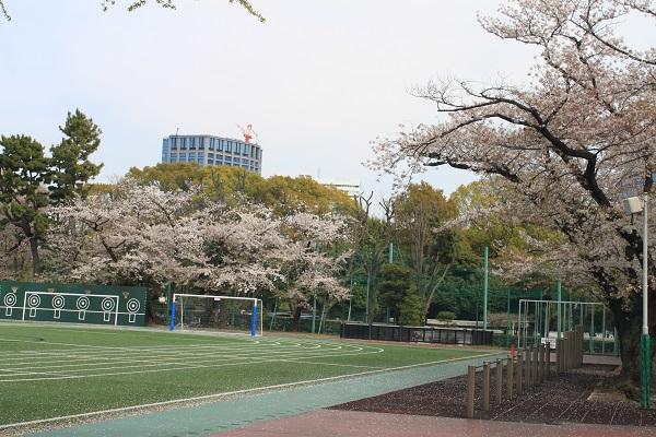 4月校庭の桜IMG_2452.JPG