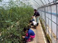 農業体験2.JPG